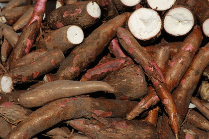 In Rural Cassava Farming, Lagos City Boy finds Way to Fortune