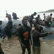 Villagers Descend On Trapped Whale In Nigeria
